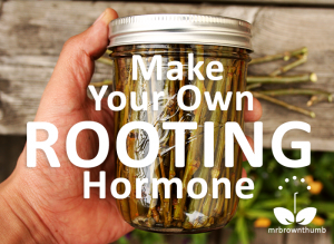 Make-Your-Own-Rooting-Hormone2