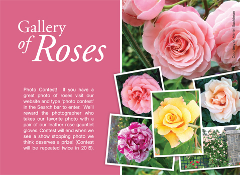 Gallery of Roses