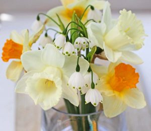 Daffodils-CG