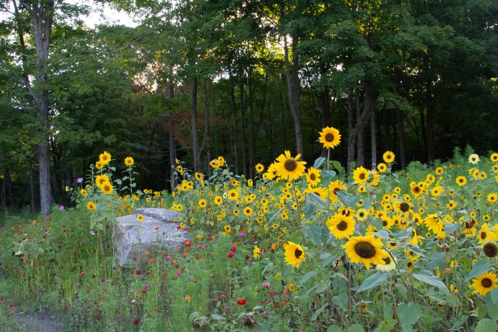 meadowgarden